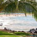 На острове Мауи