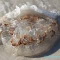 Флорида, медуза